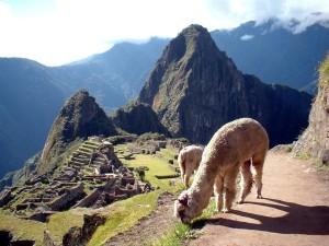 Natural Life in Machu Picchu